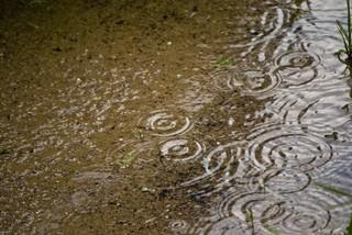 Chuck Russom FX Violet Rain