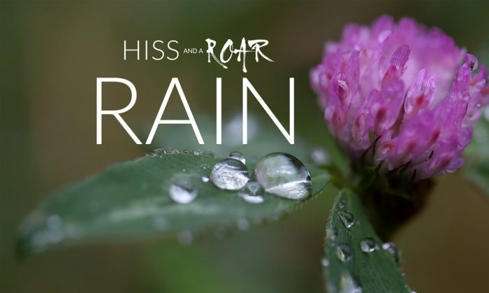HISS and a ROAR Rain