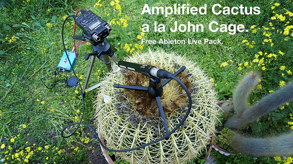 Amplified Cactus