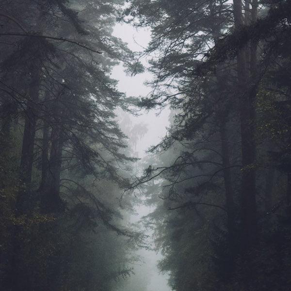Noiiz Tontario Second Nature