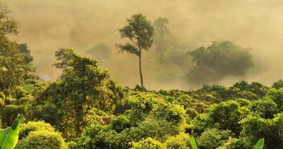 Luftrum Rainforest 2019